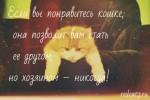 Рыжий кот Альф — воскрес!