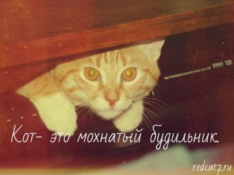 рыжий кот мотиватор сидит в ящике