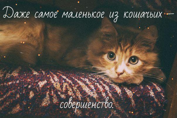 кот рыжий красивый