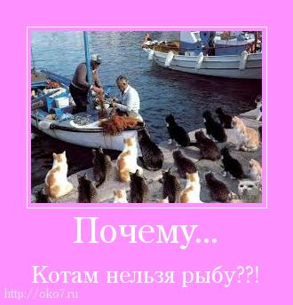 мотиватор почему нельзя котам рыбу