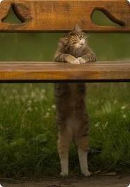 кошка гуляет что делать