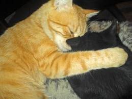 Если уличного кота принести домой, что будет с моей кошкой?