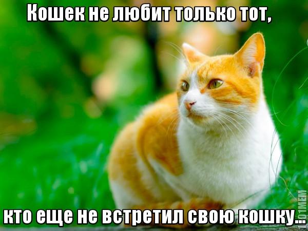 кошек не любит только тот кто не нашел свою кошку