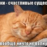 кошки-счастливые-существа-их-ничто-не-волнует