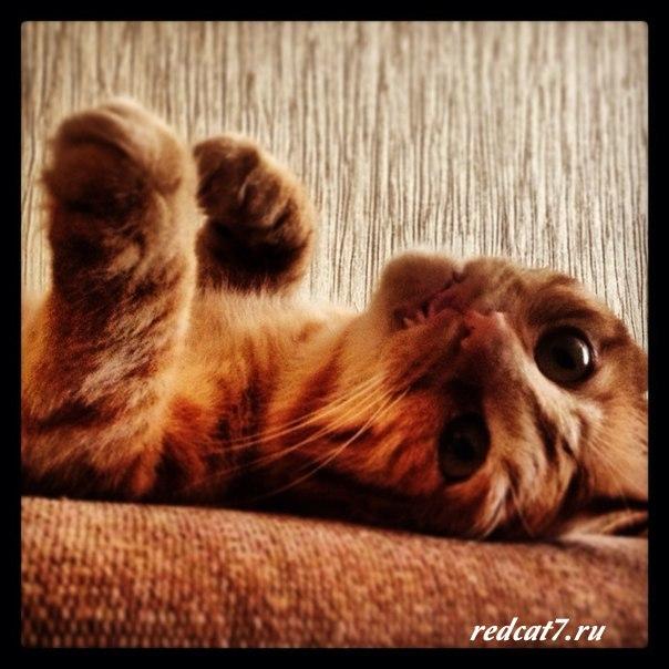 кот-странно-лежит-смотрит
