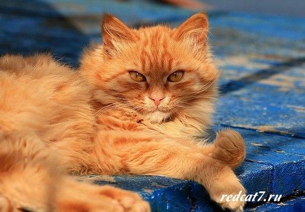 котик-рыжий-на-солнце-греется