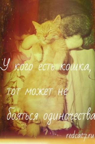 мотиватор рыжий кот