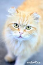 Из дневника важного рыжего кота.
