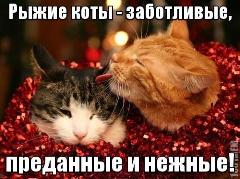 мотиватор коты рыжие заботливые и нежные
