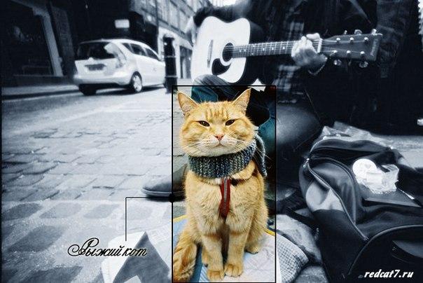 рыжий кот на улице