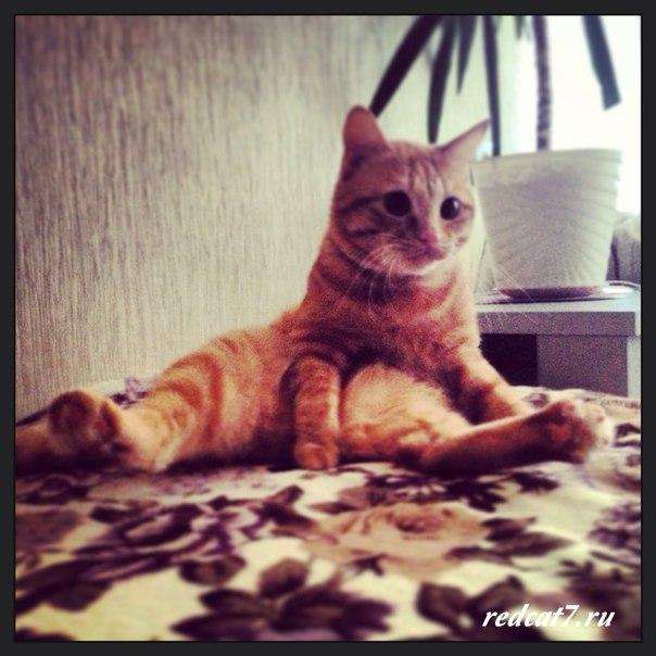 сидит-кот-рыжий-как-человек