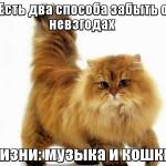 кошка помогает забыть о невзгодах мотиватор