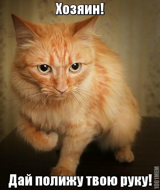 Почему кот лижет руки?