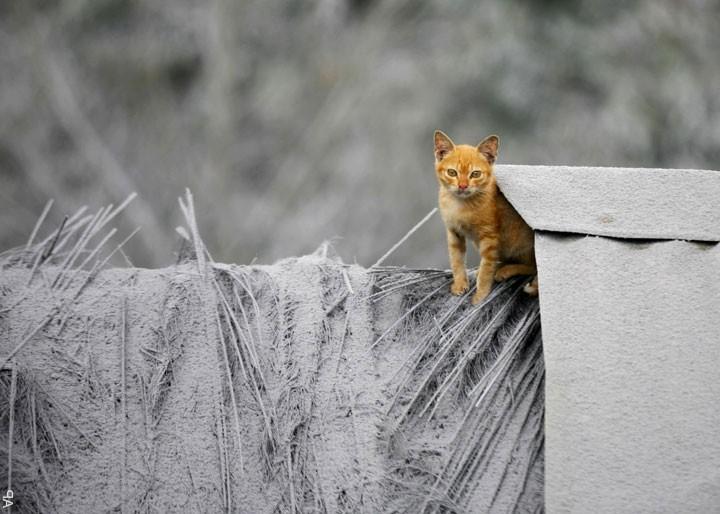 Рыжий кот и пепельная гора