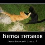 мотиватор рыжий и черный кот