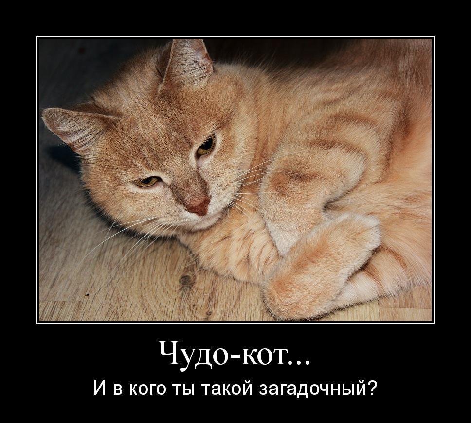 мотиватор рыжий кот загадка