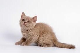 Почему кот укусит и убегает?