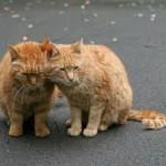 рыжие коты и кошки
