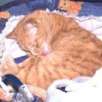 почему кот моется после еды