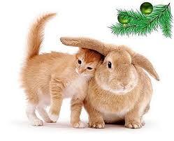 В Новогоднюю ночь коты сбегают, едят дождик и страдают от петард