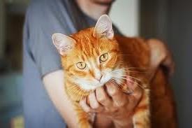 как отучить кота рыжего метить территорию