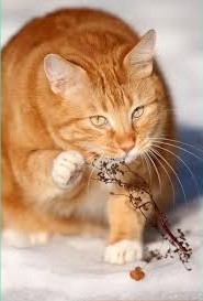 Рыжий кот красивый на снегу сидит у веточки, милашка рыжий кот мурлыка