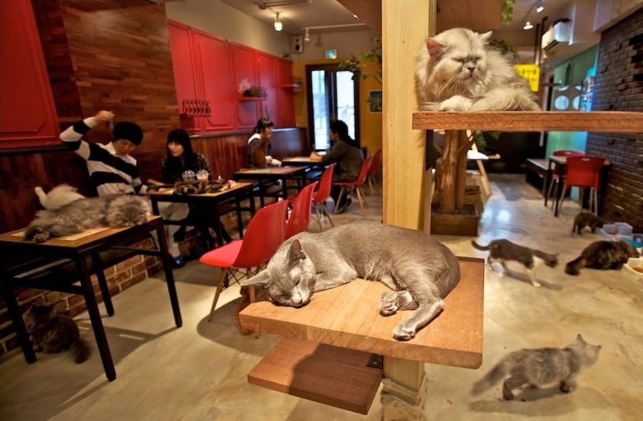 Парижские кафе: Теперь с кошками?