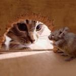 Охота за мышью