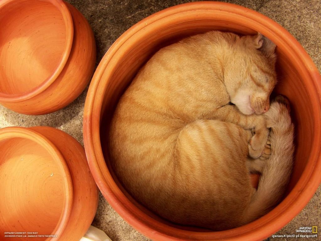 кот спит рыжий, пока еще не метит