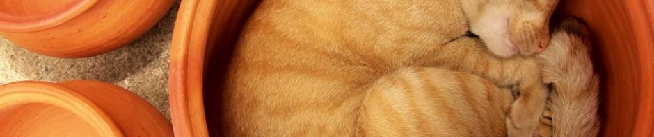 кот спит рыжий