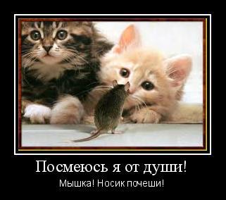 мотиватор рыжий кот мышка Кот любит, когда ему чешут нос!