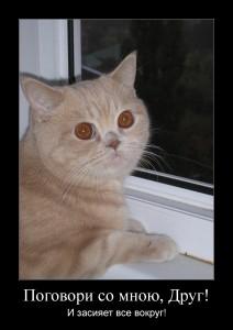 мотиватор с рыжий котом поговори со мною друг