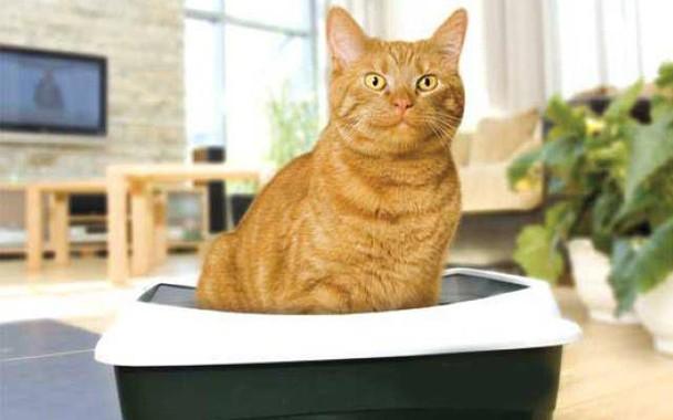 Какие бывают наполнители для кошек?