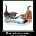 поиграй с котенком ощути себя ребенком мотиватор
