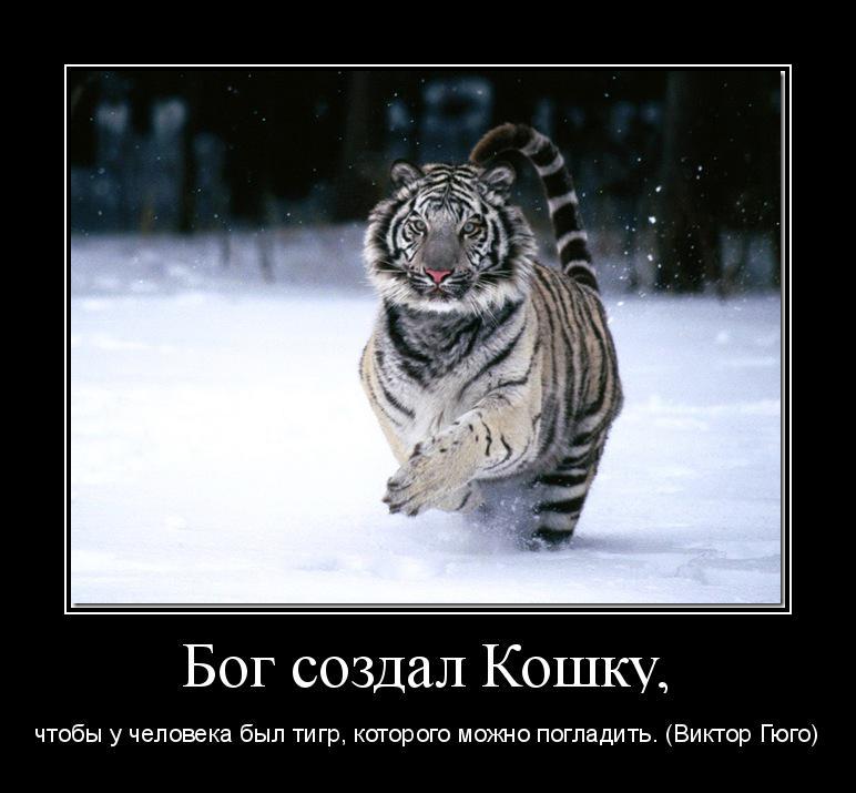 мотиватор Бог создал Кошку, чтобы у человека был тигр, которого можно погладить. (Виктор Гюго)