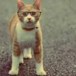 Зачем котам конусообразные ошейники?