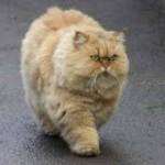 кот рыжий важный, Чему можно научиться у рыжего кота?