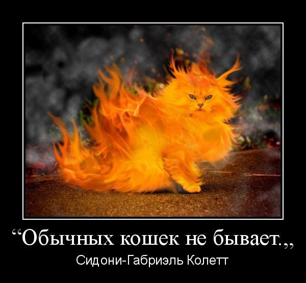 мотиватор обычных кошек не бывает