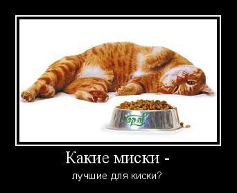 какие миски лучше для кошки