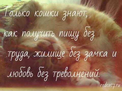 мотиватор кошки коты рыжие любимые