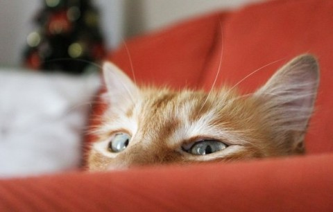 писатель шемшук и рыжий кот смотрит, глаза кота рыжего, кошка рыжая