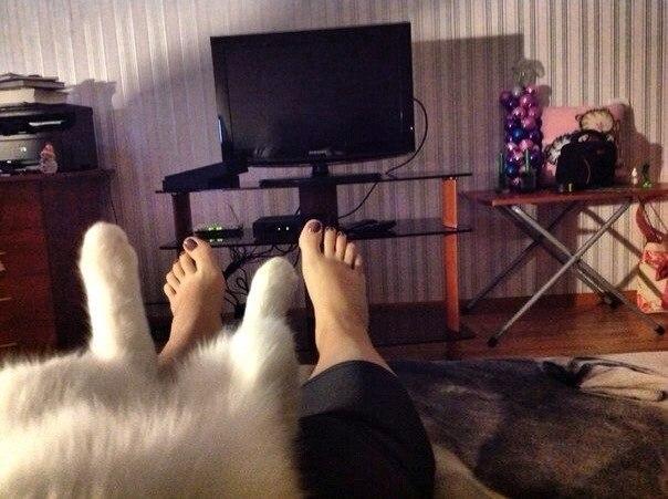 коты целители