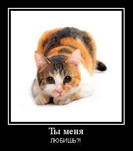 Трехцветные кошки легенды и поверья