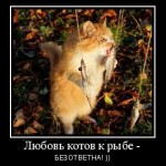 мотиватор рыжий кот любит рыбу