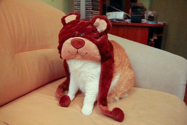 кот сидит в шапке смешной