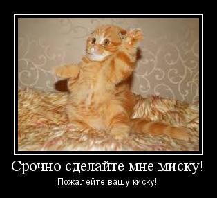демотиватор-сделайте мне-миску-кот-рыжий