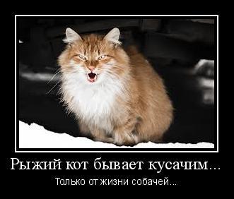почему рыжий кот кусает