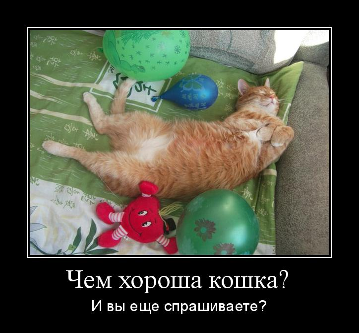 кошка-мотиватор-хороша-53543