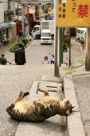 кошка-полосатая-на ступенях