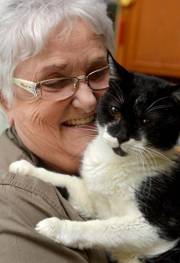 кот-долгожитель-Вэдди